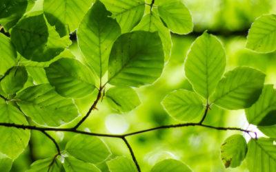 CSR arbete växter ljus framtid