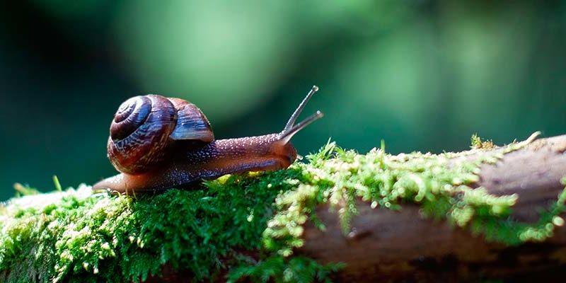 Snigel på stock i skogen: en symbol för långsamma rekryteringar